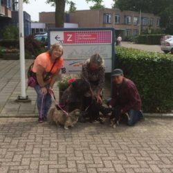 Knuffelhonden van Haarlem e.o.